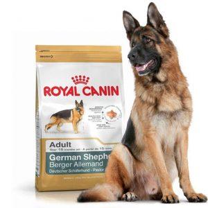 غذای خشک سگ رویال کنین مخصوص سگ های بالغ نژاد ژرمن شپرد-11کیلویی